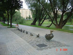 Title: ducklings in moscow
